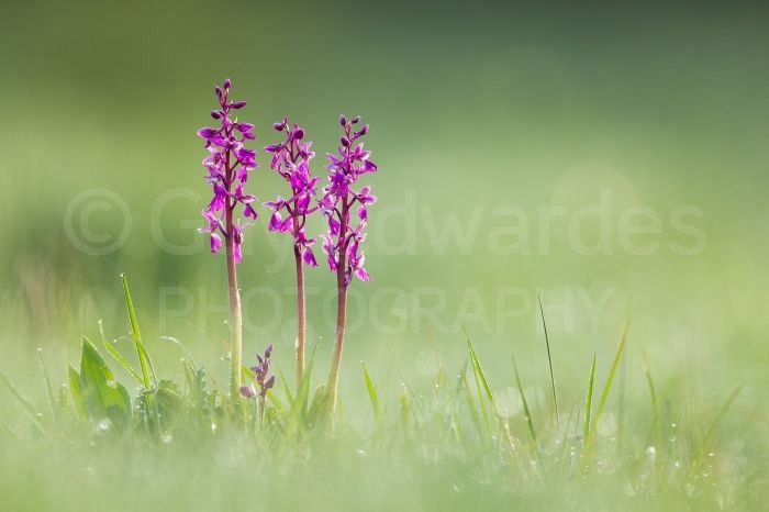 Beanbags provide a low shooting angle which is often ideal for wildflower photography