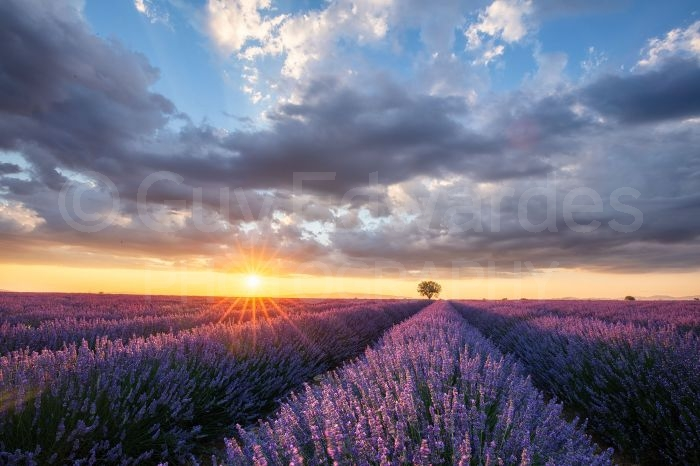 Lavender fields in Provence taken with Canon EOS 5DSr with 16-35mm f4L IS on the FlexShooter Pro