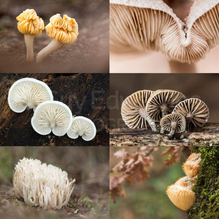 A selection of fungi which I have yet to properly identify