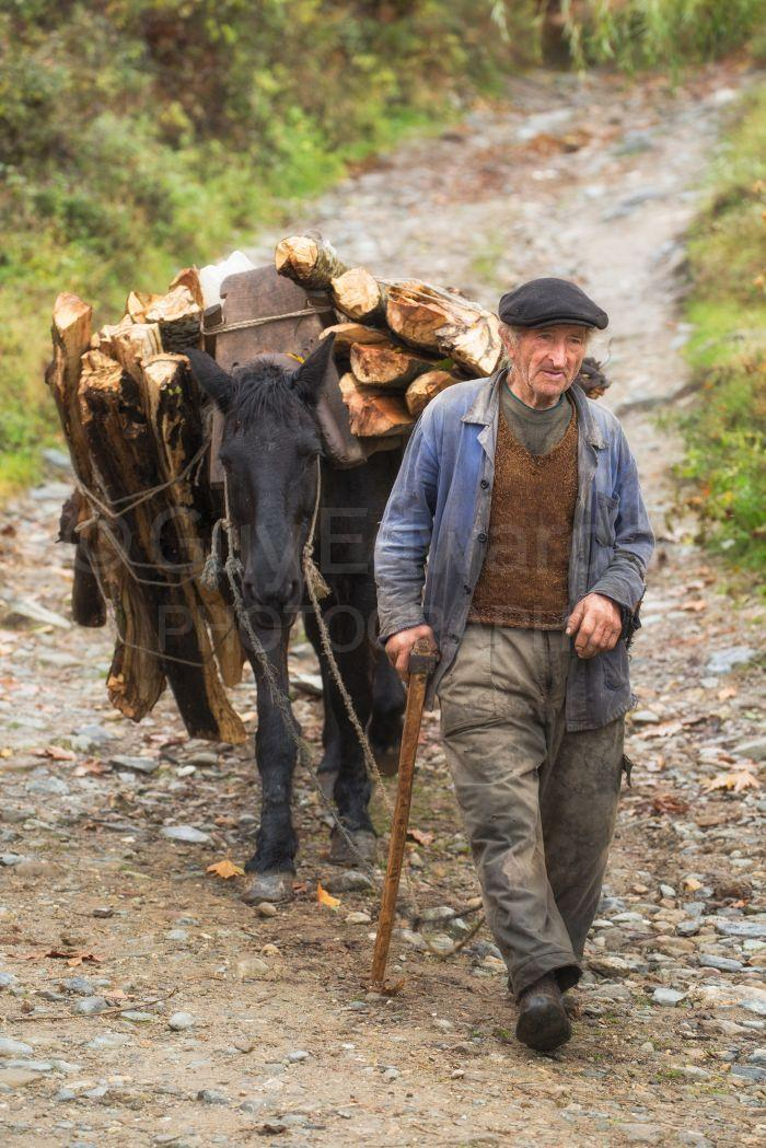 Wood is brought down from the forests by donkey, pony and horse and cart - all common sights throughout rural Bulgaria