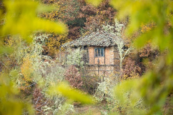 A derelict bee-keepers house hidden in the forest