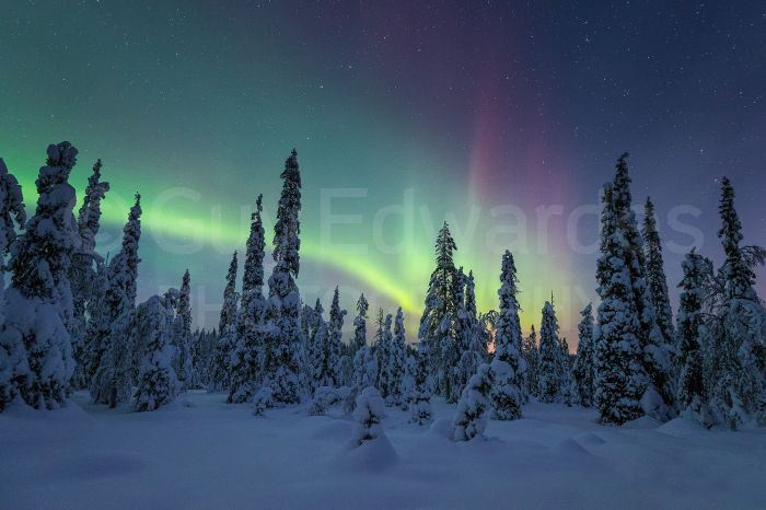 Northern Lights illuminating the night sky in Riisitunturi National Park
