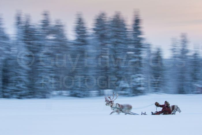 Reindeer and sleigh captured using a shutter speed of 1/8th sec as they sped through the snowy landscape.